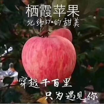 棲霞蘋果 紅富士
