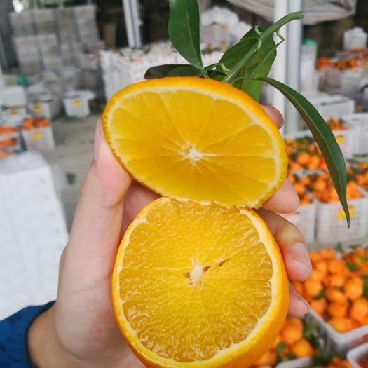 爱媛38号柑桔 套袋果  现摘现发四川爱媛38号柑橘果冻橙,支持一件代发