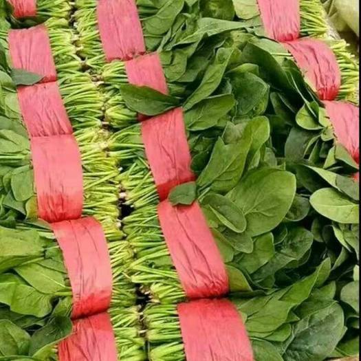 山东省滨州市惠民县 万亩菠菜种植基地,货源充足,做工精细,规格齐全,大量供货!