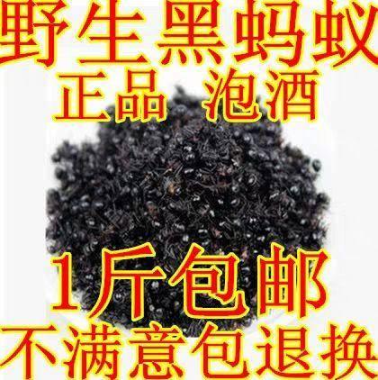 吉林省吉林市蛟河市 東北野生黑螞蟻500g大螞蟻干泡酒料螞蟻正品長白山黑螞蟻