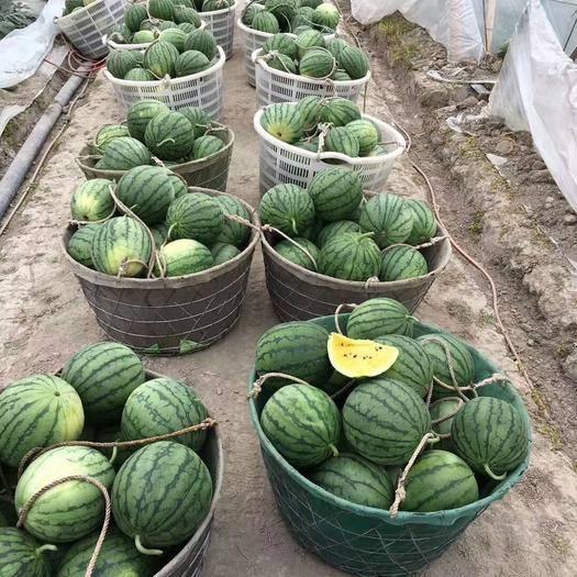 廣東省汕尾市海豐縣 廣東西瓜種植基地大量上市