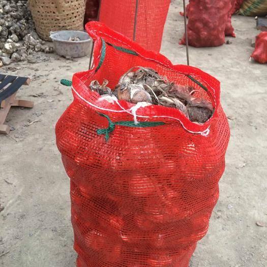 福建省漳州市龍海市 漳州水仙花 花袋  (一袋約30斤左右)