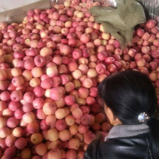 湖北省荊州市江陵縣 甘肅紅富士蘋果,脆甜,價格美麗