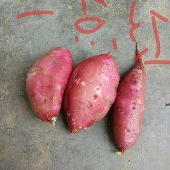 南瓜紅薯 混裝通貨 紅皮