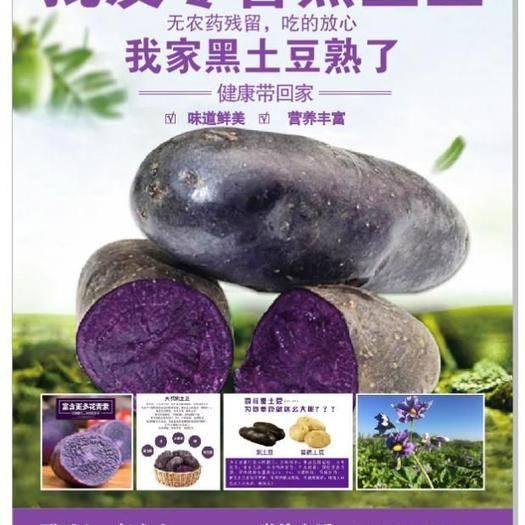 云南省红河哈尼族彝族自治州开远市黑金刚土豆种子 黑金刚土豆,种子