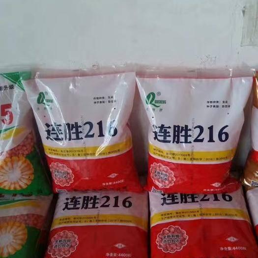山东省济南市历城区 高产稳产玉米种子,欢迎新老朋友,订购,
