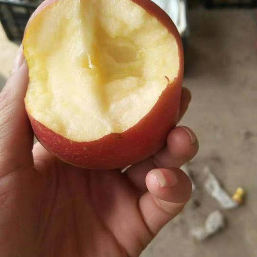 红富士苹果 75以上冰糖心红富士