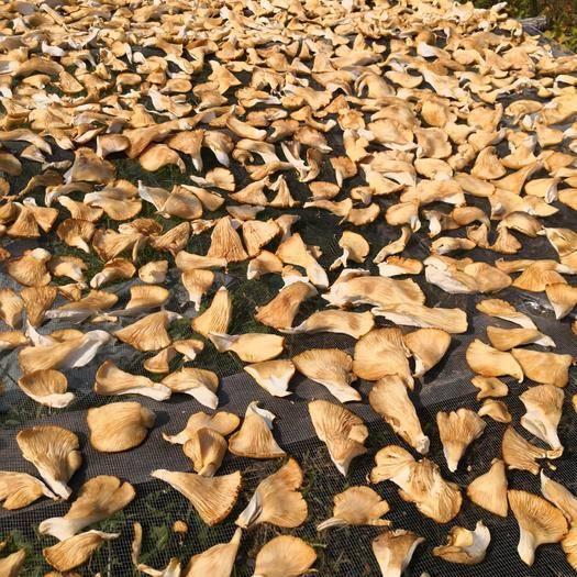 黑龙江省哈尔滨市尚志市蘑菇 黑龙江上等元蘑