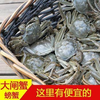 公蟹 湖北潛江高品質干貨打級大閘蟹螃蟹毛蟹河蟹塘口直接發貨