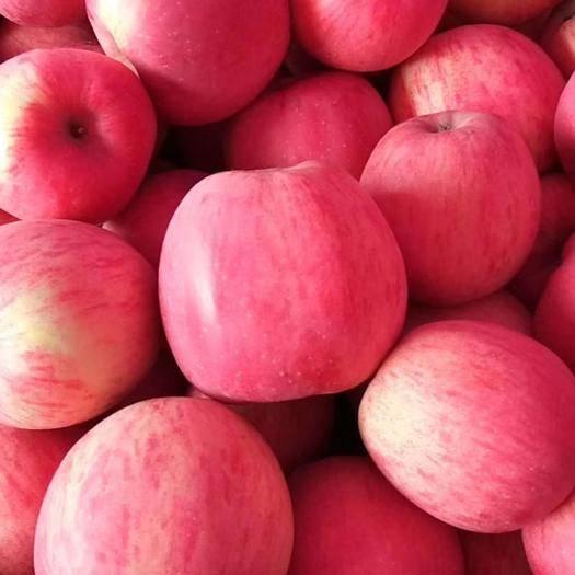 甘肅省平涼市靜寧縣 靜寧紅富士蘋果,好不好吃了才知道