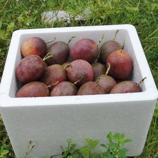 廣西壯族自治區玉林市北流市 廣西百香果現摘現發新鮮熱帶當季水果大果5斤包郵