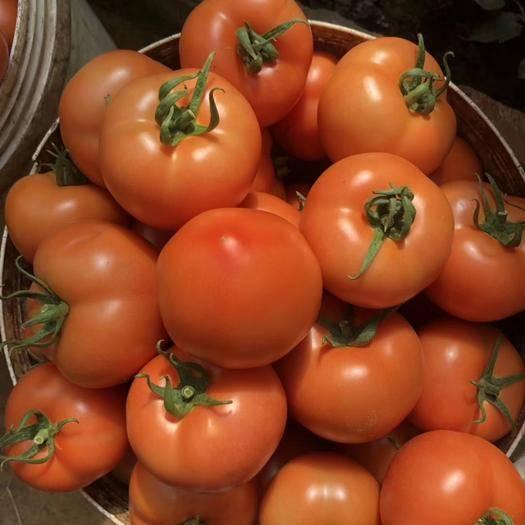 山东省潍坊市寿光市大红番茄苗 供应大红倍盈苗子