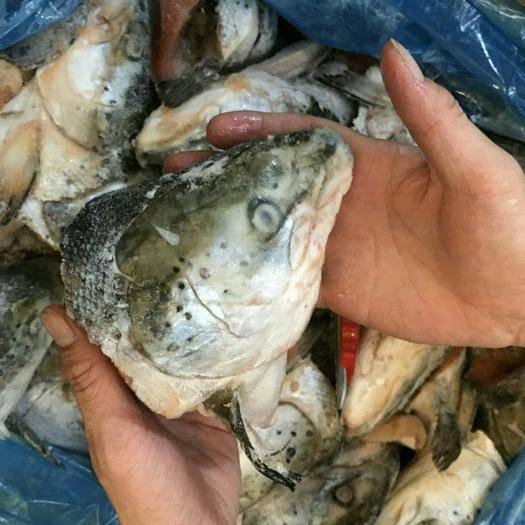 廣東省廣州市花都區 法羅魚頭餐飲冷凍水產品冷凍三文魚頭燉蒸燒烤400-700g