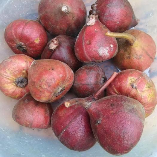 廣西壯族自治區河池市都安瑤族自治縣 野生的大果榕香甜可口有需要的嗎