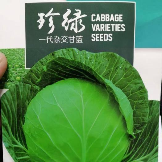 河南省商丘市夏邑县 一代杂交珍绿甘蓝种子