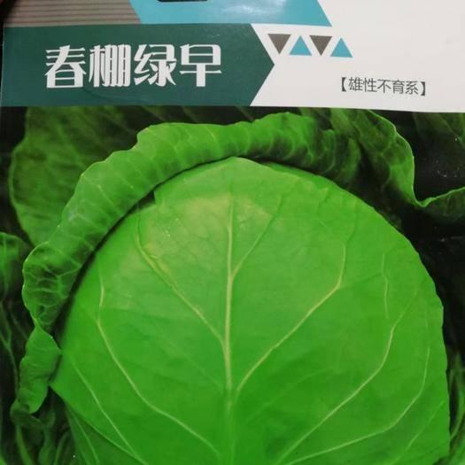 河南省郑州市二七区绿甘蓝种子 春棚绿早甘蓝种子