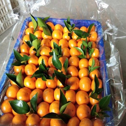 江西省抚州市南丰县南丰蜜桔 26元一箱包邮价。不崔红不打蜡,能久放。24小时内发货。