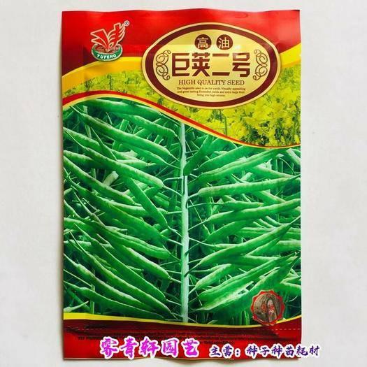 河南省郑州市二七区油菜籽种子 油菜种子散称袋装油菜种子包邮