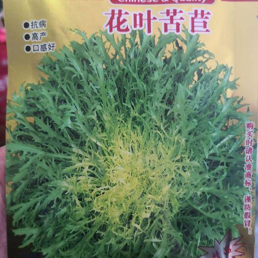 河南省商丘市夏邑县 抗病,高产,口感好,花叶苦苣种子
