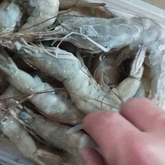 廣東省江門市臺山市凍南美白對蝦 冰蝦,凍蝦,南美白,價格只說凈重。