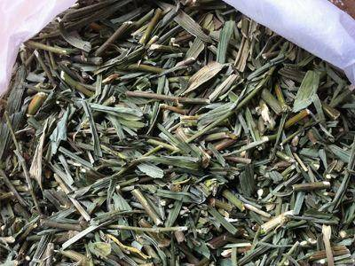 安徽省亳州市譙城區 中藥材,柴胡苗,一斤起包郵,無需運費