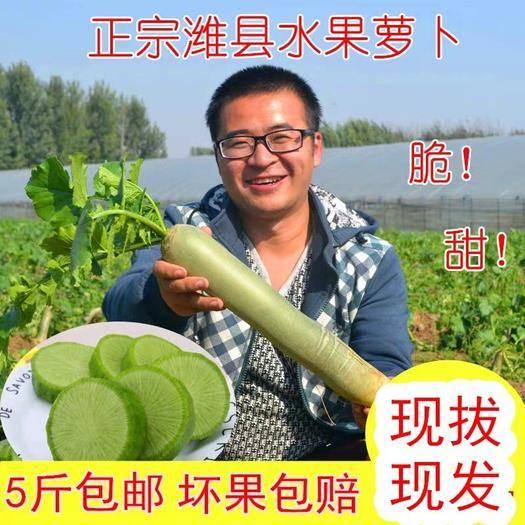 山东省潍坊市寿光市 一件代发  潍县萝卜10斤装包邮潍坊萝卜沙窝水果萝卜