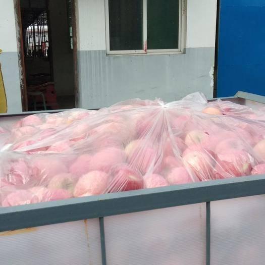 陕西省咸阳市旬邑县红富士苹果 睡了的平果