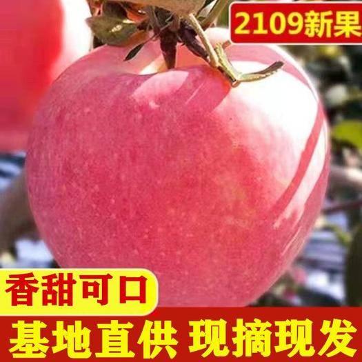 山西省運城市臨猗縣 山西脆甜冰糖心紅富士膜袋丑蘋果一件代發5斤10斤24小時發