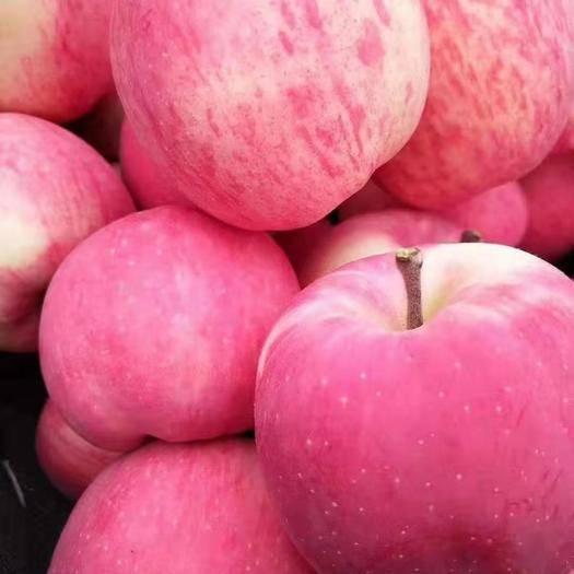 甘肅省平涼市靜寧縣 10斤69.8元包郵90㎜以上甘肅靜寧蘋果紅富士單果500