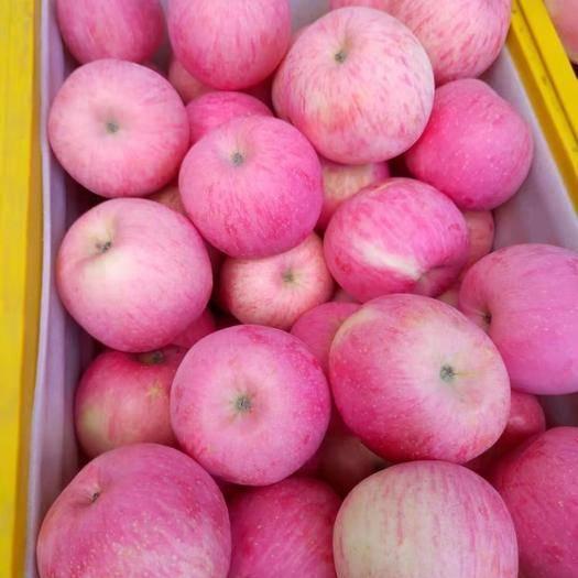 甘肃省庆阳市宁县洛川苹果 75mm以上 条红 纸袋
