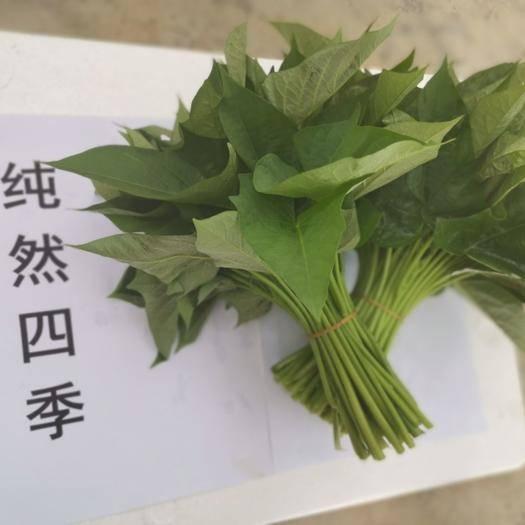海南省三亞市天涯區紅薯梗 精品冬季紅薯葉