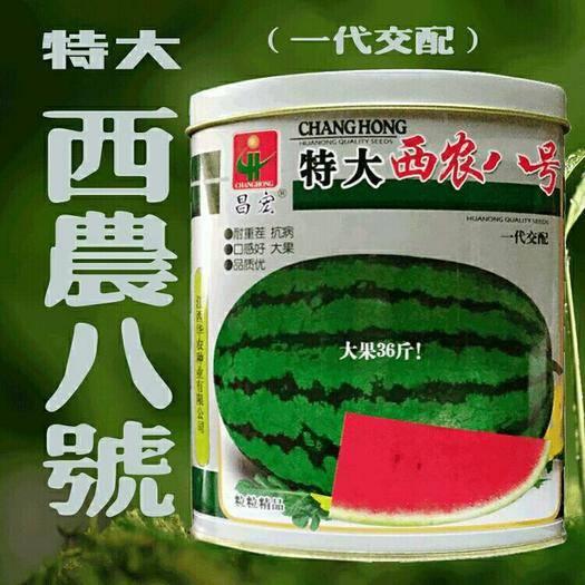 江西省宜春市樟树市 特大西农八号西瓜种子大果中熟大红瓤甜爽抗病强耐重茬50克