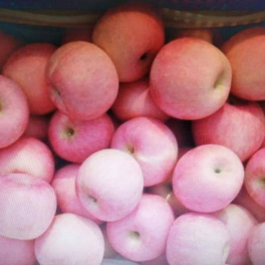 山东省烟台市莱州市 优质苹果,物美价廉,诚信合作,欢迎采购!