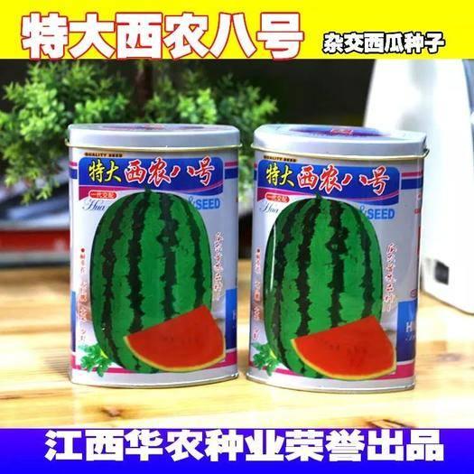 江西省宜春市樟树市 特大西农八号西瓜种子果大产量高经典瓜种成熟可靠的品质