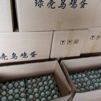 綠殼雞蛋,烏雞蛋,新鮮量大