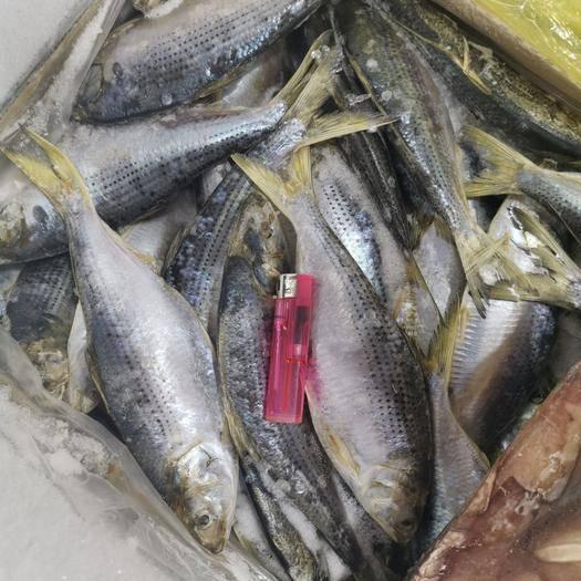 辽宁省大连市沙河口区 鳞鲫鱼0.3-0.4斤每条