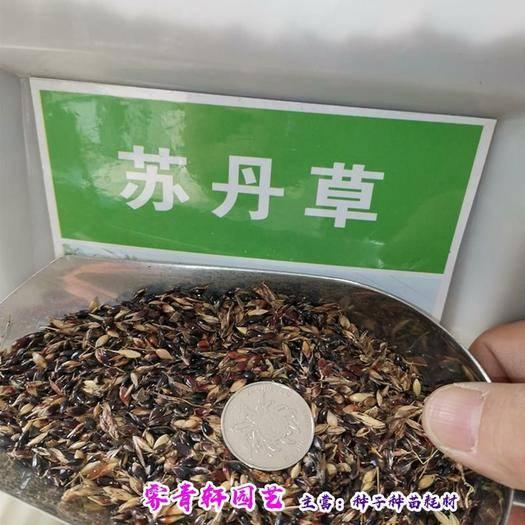河南省郑州市二七区苏丹草种子 多年生牧草苏丹草鱼草种子包邮