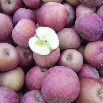 昌紅富士蘋果 75以上不封頂紅富土光果套袋都有
