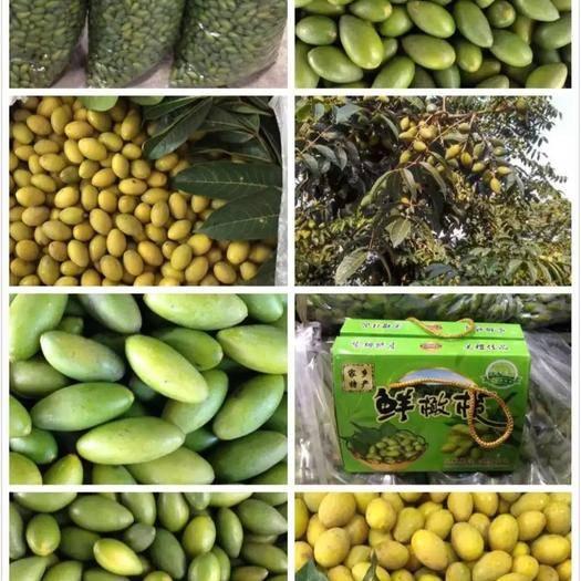 广东省潮州市潮安区 橄榄