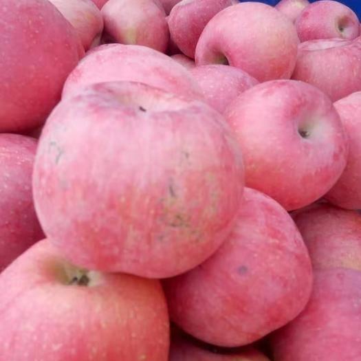 山東省煙臺市蓬萊市紅富士蘋果 煙臺蓬萊市紅富士三級果,價格便宜,果品口感佳