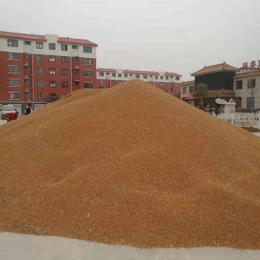 山東省東營市河口區紅纓子高粱種子 自家種的紅纓子種