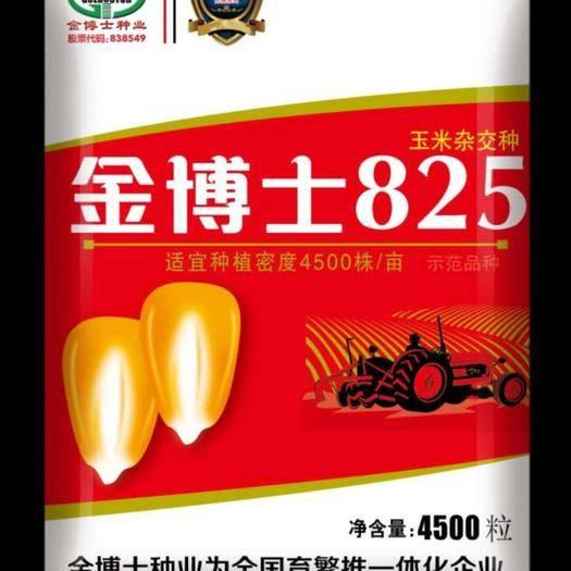 遼寧省沈陽市渾南區金博士825玉米種子 金博士825,廠家直銷,質量保真