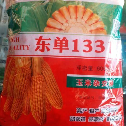 遼寧省沈陽市渾南區東單1331玉米種子 東單1331玉米種
