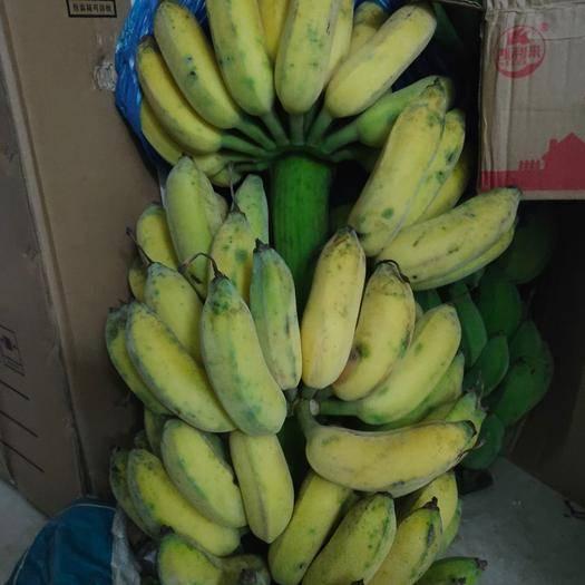 河北省邯郸市复兴区 香蕉 芒果 拼车运输