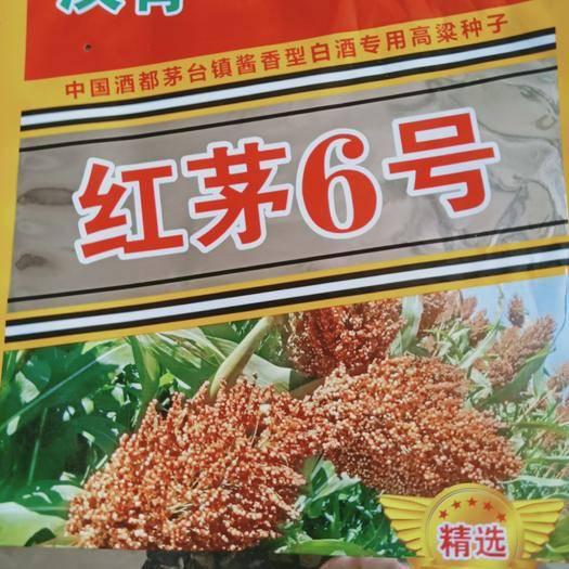河北省滄州市青縣紅茅六號高粱種子 漢青種業紅茅六號高粱種