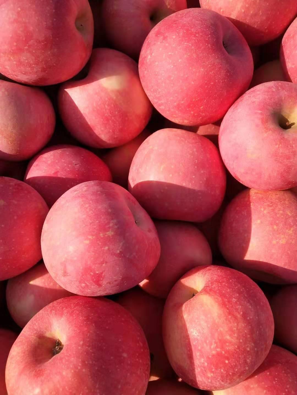 年貨山東蘋果 紅富士蘋果產地直銷 提供人工分揀包裝裝車找車等