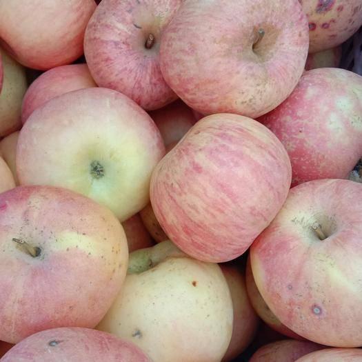 山東省淄博市張店區 高次蘋果大量供應