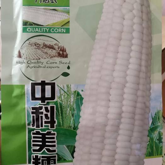 河南省商丘市夏邑縣 中科超大棒甜糯型玉米種子棒子大甜味足糯型強口感好產量高抗病好