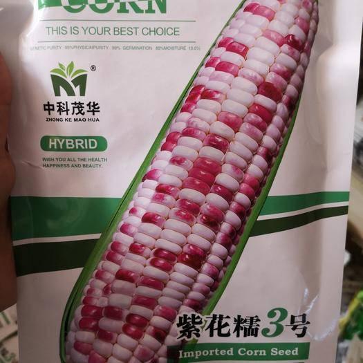河南省鄭州市二七區 水果玉米種子 糯玉米種子 甜糯玉米種子