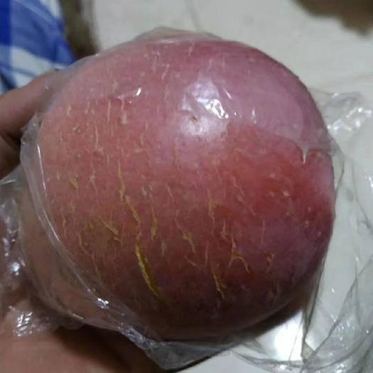 山西省运城市临猗县冰糖心苹果 80mm以上 统货 膜袋